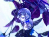 Crystal ball grapes violet
