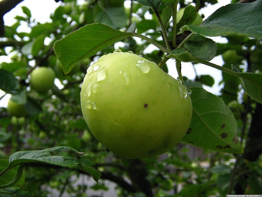 Green Apple, 4