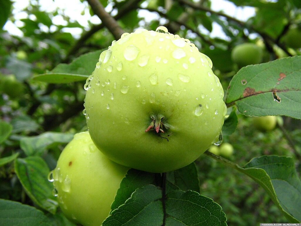 Green Apple, 6