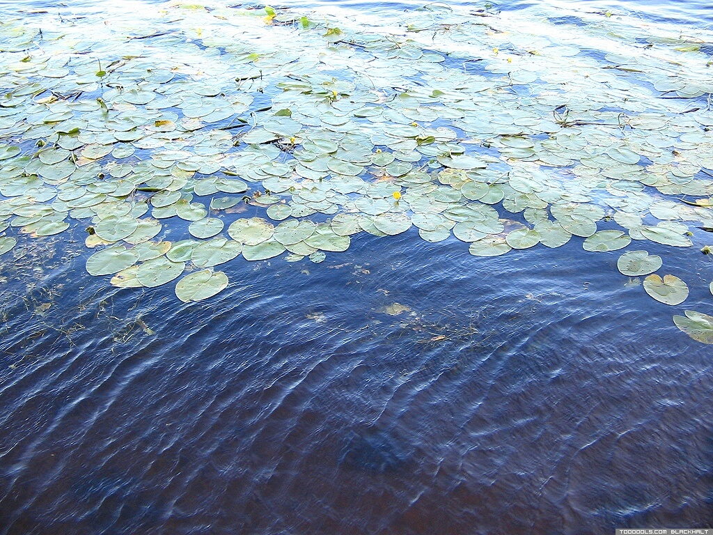 Water Lilies, 1