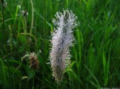 Meadow Flowers, 4