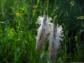 Meadow Flowers, 6