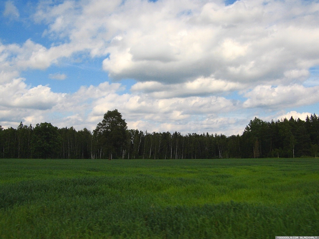 June 2007, Latvia #4 / Landscape, 12