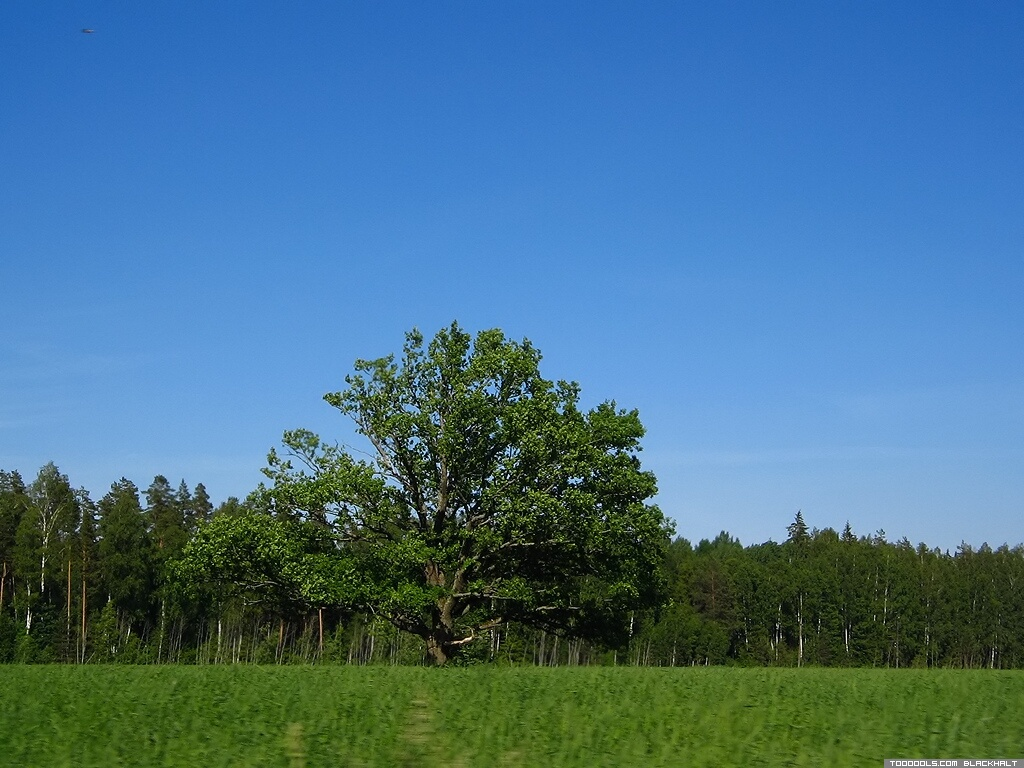 Landscape, 2, Oak-tree