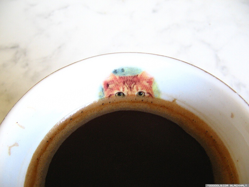 Morning Cat, coffee