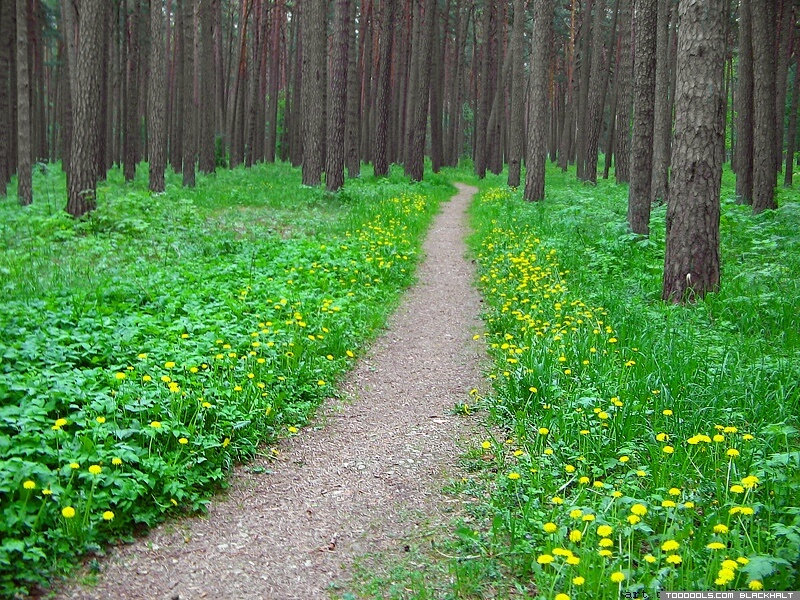 Dandelions forest